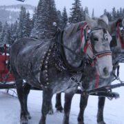 sleigh-10