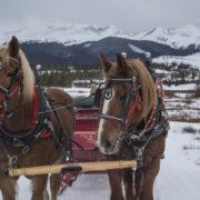 GC sleigh rides 4