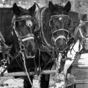 brek_sleigh_ride_horses-3